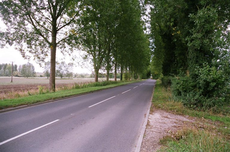 Avenue of poplar trees, A340