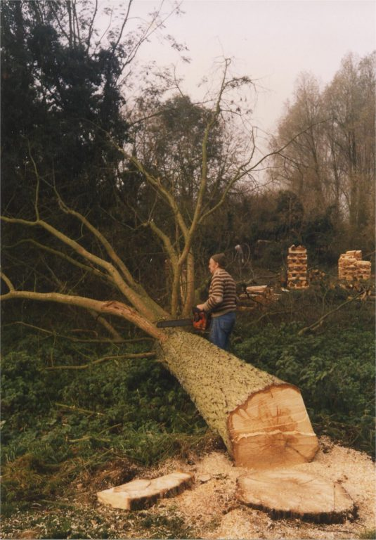 Willow felling