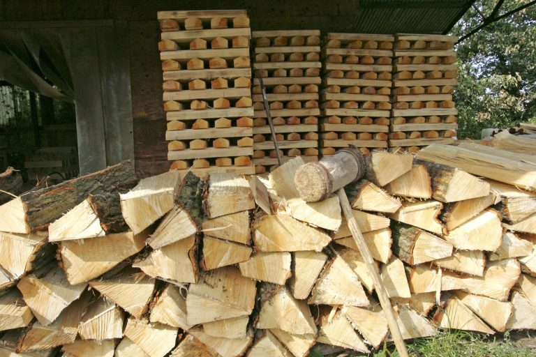 Willow clefts