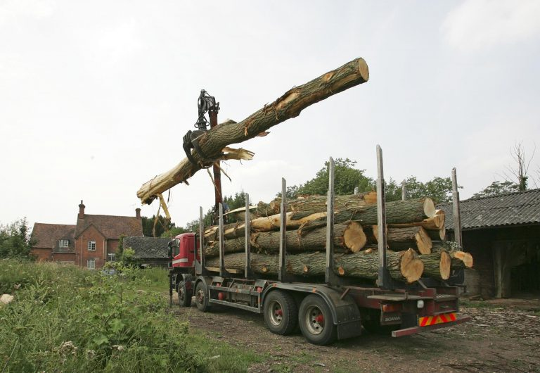Willows being delivered to the woodyard