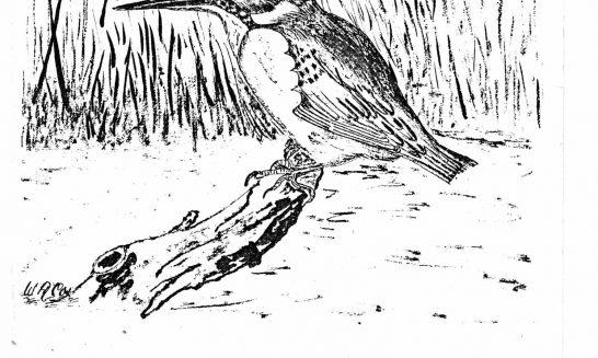 Parish mag cover- Kingfisher, June 1980